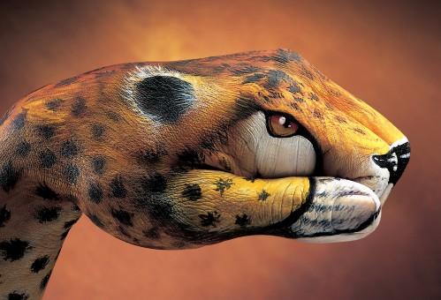 Cheetah-20011-499x340
